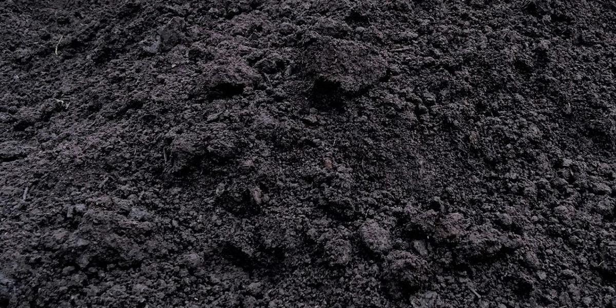 Торф-чернозем